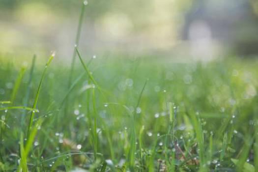 green grass nature  #17124