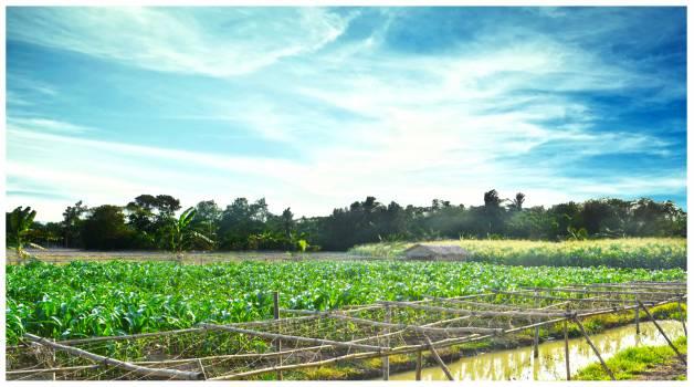Landscape Field Rural Free Photo
