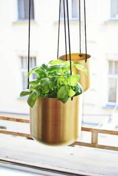Plant Food Leaf #171465