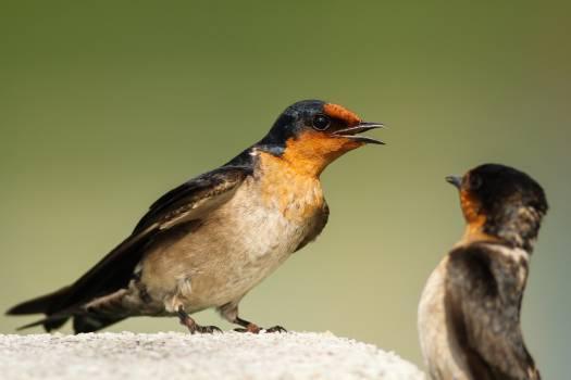 Bird Wildlife Beak Free Photo