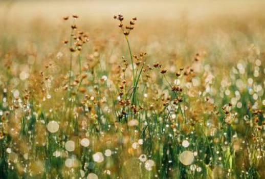 flowers plants grass  Free Photo