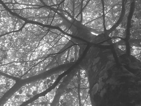 Branch Branchlet Plant Free Photo