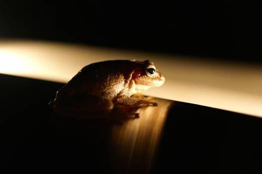 Frog Animal Peeper #171817