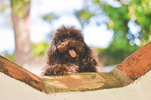 Spaniel Dog Sporting dog #171838