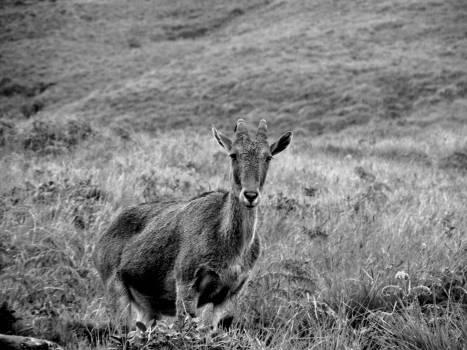 Deer Wildlife Antelope Free Photo