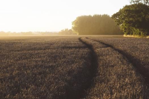 Field Landscape Land #172369