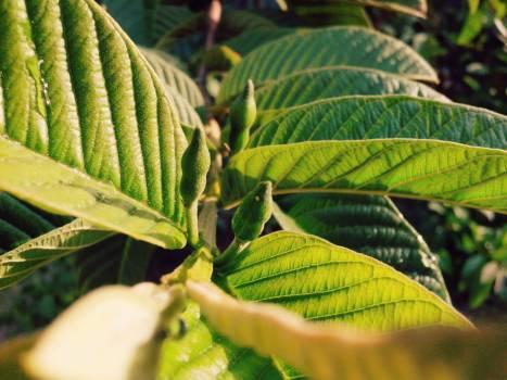 Tree Plant Vascular plant #172599