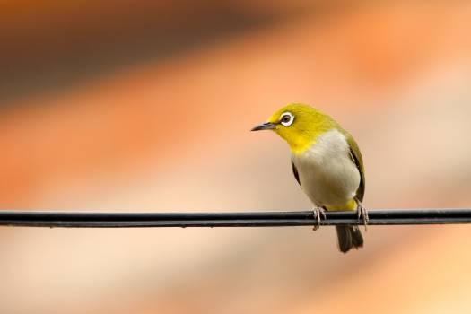 Habitat Bird Wing Free Photo