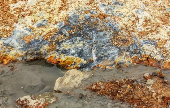 Starfish Texture Echinoderm Free Photo