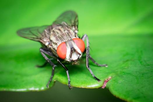 Fly Insect Arthropod #173045