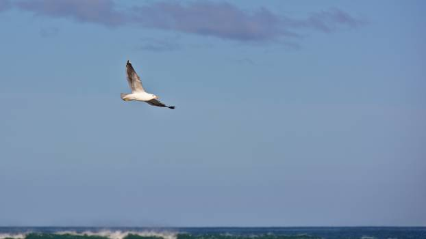 Albatross Bird Seabird Free Photo