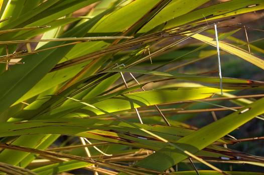 Tree Woody plant Vascular plant Free Photo