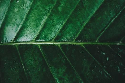 Leaf Plant Pattern Free Photo