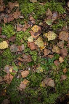Fungus Plant Organism Free Photo