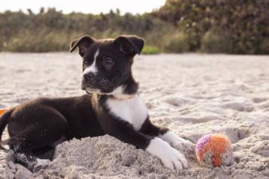 dog pet ball  #17397