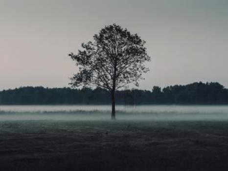 trees field mist  #17409