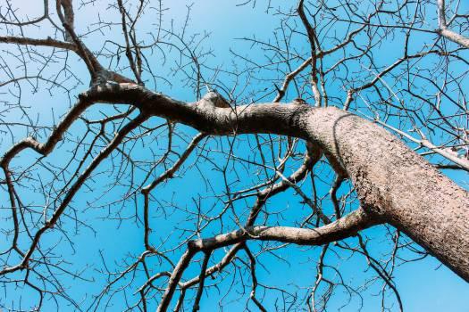 Tree Woody plant Branch Free Photo