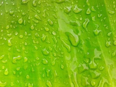 Drop Leaf Green Free Photo