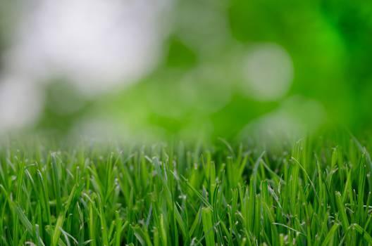 green grass nature  #17440