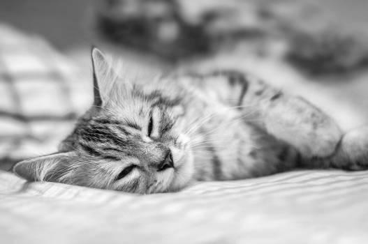Kitten Cat Feline #174447