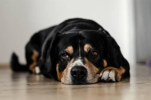 dog pet animal  #17446
