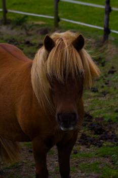 Horse Ranch Horses Free Photo