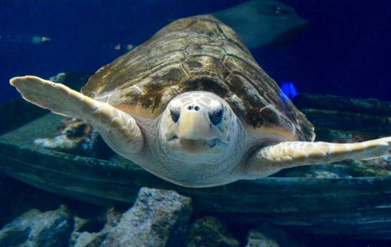 Turtle Sea turtle Free Photo