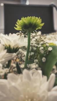 Flower Plant Herb #175192