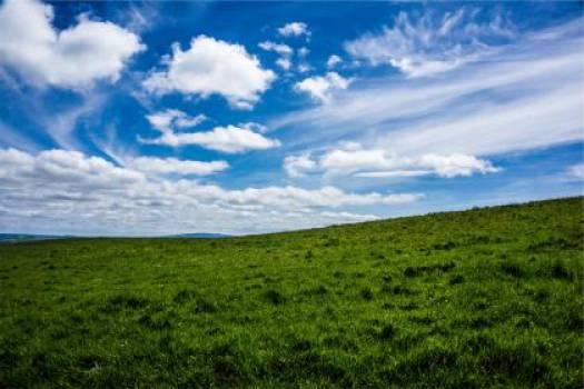 green grass field  #17536