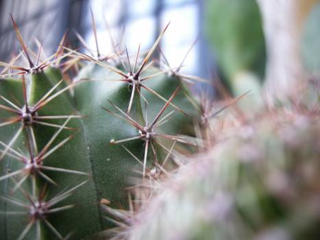Cactus Plant Desert Free Photo