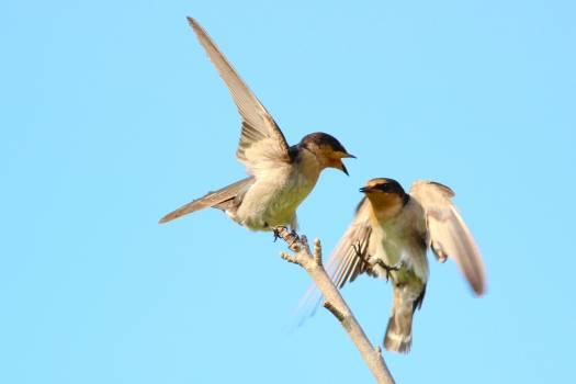Bird Kite Hawk Free Photo