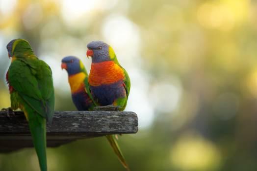 Bird Parrot Beak Free Photo