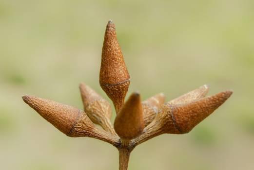 Stalk Plant Leaf Free Photo