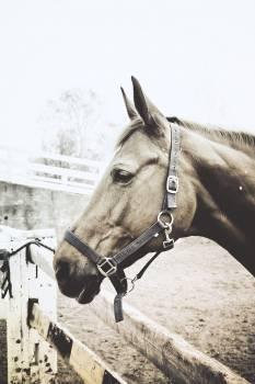 Horse Thoroughbred Grey Free Photo
