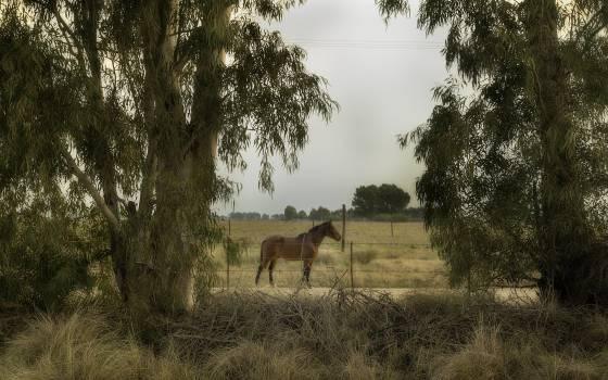 Horse Pasture Grass Free Photo