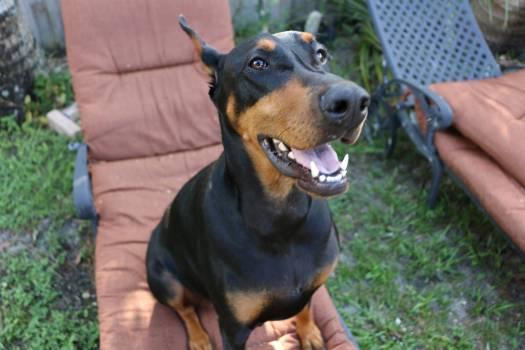 Watchdog Dog Pet Free Photo