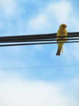 Bird Beak Feather #178107
