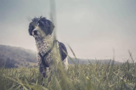 Hunting dog Terrier Dog #178221