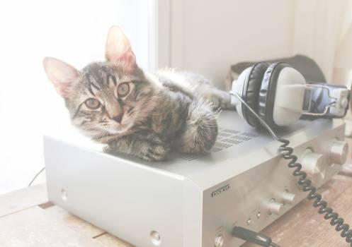 cat amplifier headphones  #17845