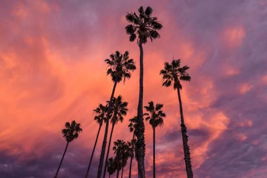 purple sunset sky  #17941