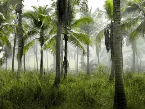 palm trees jungle tropical  Free Photo