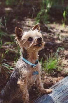 Terrier Hunting dog Dog #179622