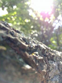 Tree Lizard Chain Free Photo