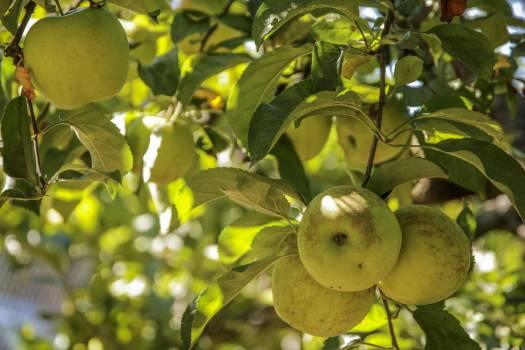 Edible fruit Fruit Citrus #180430