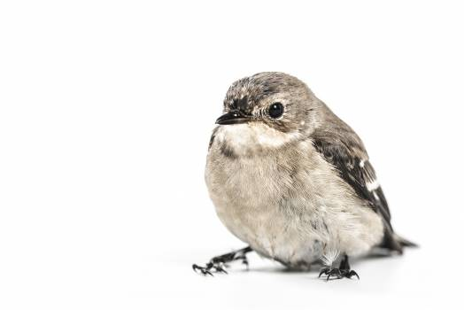 bird animal white background  #18046