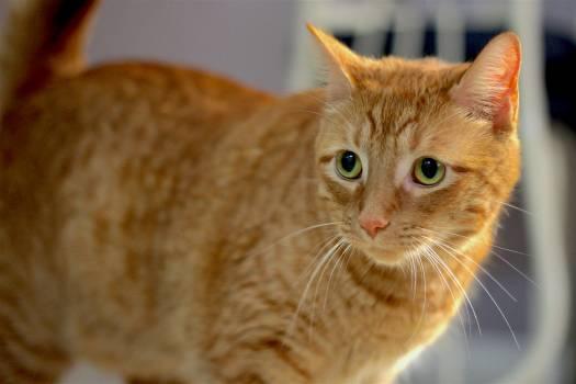Cat Feline Kitten #180560
