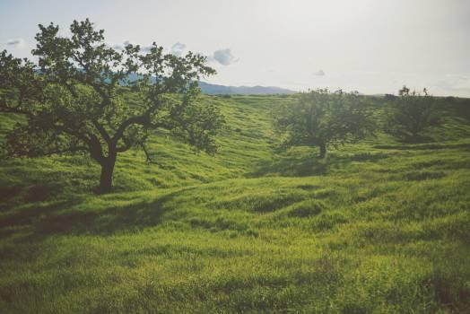 green grass trees  Free Photo