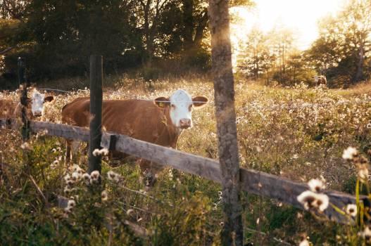 Animal Grass Farm #180845