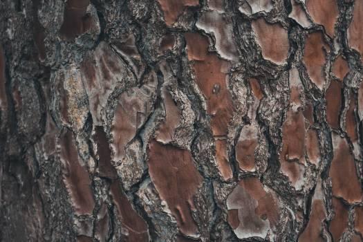 Tree Texture Bark Free Photo