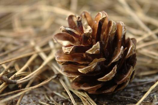Fungus Seed Hen-of-the-woods Free Photo